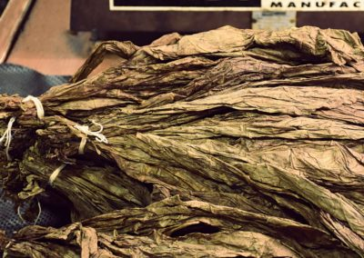 Tobacco Leaves in Bunches